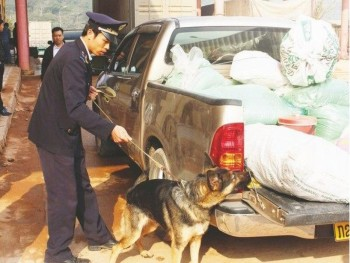 the story of training sniffing dogs of vietnamese customs