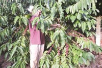 coffee export handshake to overcome difficulties