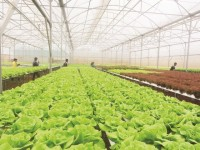 need to create an environment for a wave of investment in agriculture