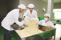 to escape the trap for cashew industry