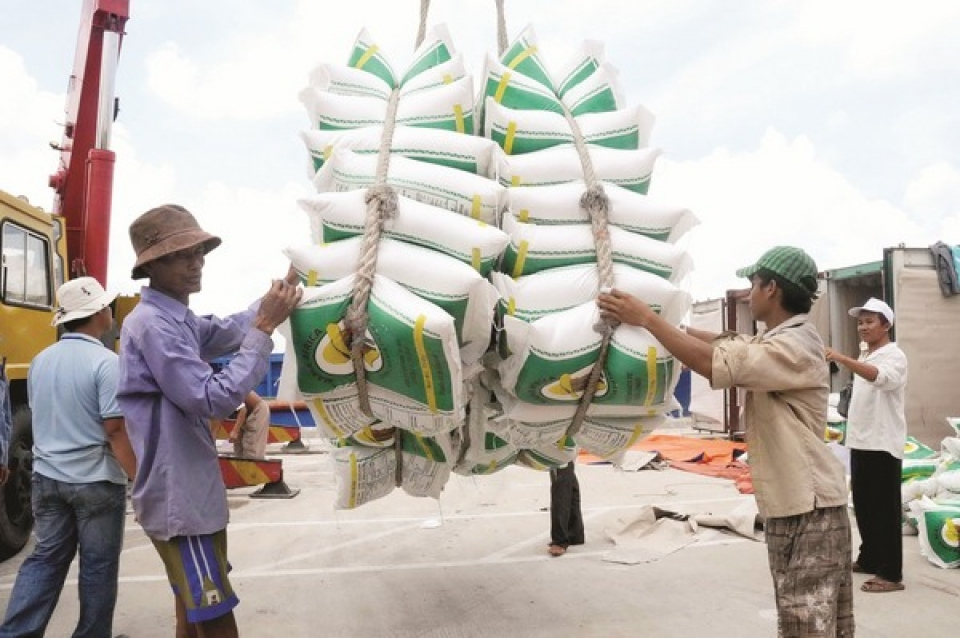 analyzing the molting of rice export story