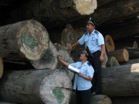 the customs need to strengthen cooperation to combat illegal smuggling of logs