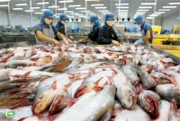 pangasius brings benefits for exporters