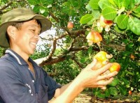 lack of raw material to prevent export of cashew nut