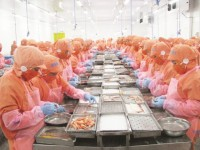 seafood exports to the eu drastic not to be the yellow card