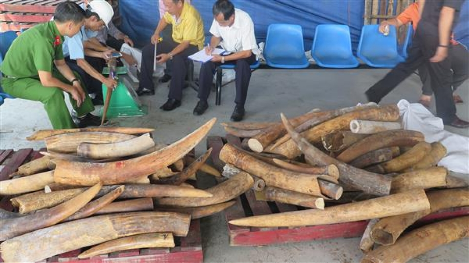 why are ivory smuggling suspended