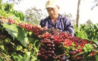 public private partnership for transferring coffee exports from bagging to packaging
