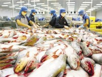 suspending unqualified food safety certificates for catfishes