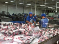 china overtakes the us as the largest import market for catfish from vietnam