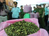 handling of khat leaves waiting for guidance of the ministry of public security