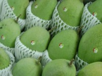 fruit exports to us japan up 80