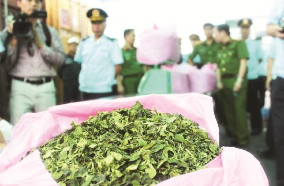 prosecute the case of transporting 26 tons of khat drug containing leaves in hai phong