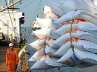 rising supplies eat into vietnams rice export prices
