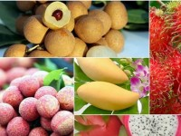 fruit vegetable export value up in h1
