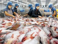 vietnam boosts catfish exports to us china brazil