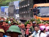 vietnam earns 42mln from lychee export to china