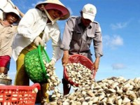 exports of bivalves jump 16 in first half of 2016