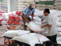 vietnams rice exports fall during january august