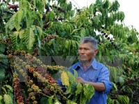 vietnam uk seek ways to boost coffee trade