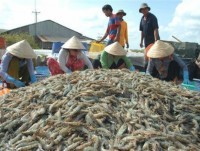 shrimp exports to hit us 31 billion this year