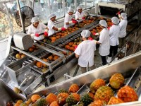 production by value chains increases vietnams vegetable and fruit exports