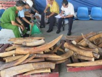 set up special projects to destroy wildlife smuggling rings