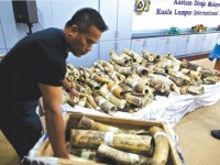 customs make jumbo catch at kl international airport