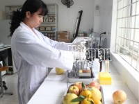 the general department of vietnam customs guides implementation of decree 15 on food safety