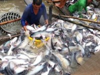 tra fish exports raising in the last month of the year