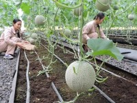how many business conditions in the agricultural field abolished in 2018