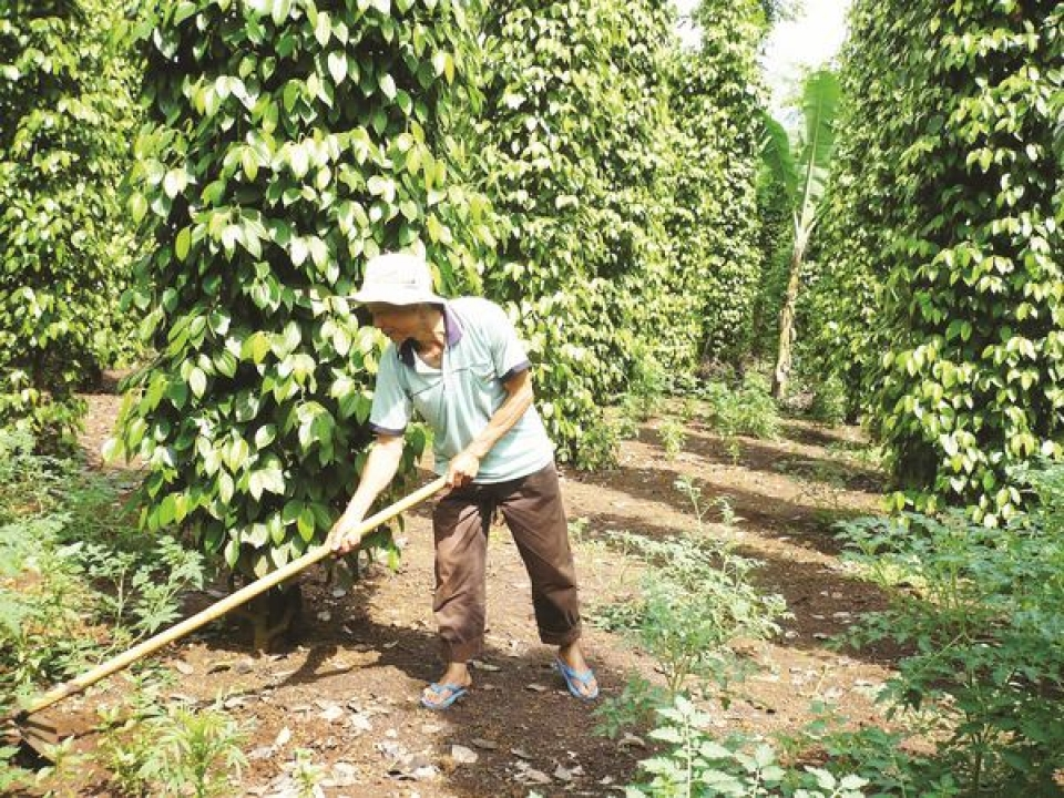 sustainable growth for pepper industry