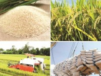 institutional barriers for vietnamese rice removed