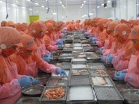 pressure from brackish shrimp export of over us 42 billion