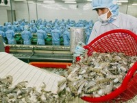 overcoming the situation of seafood shipments returned by foreign countries