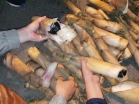 drugs hidden in bamboo shoots