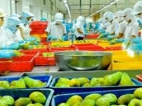 the uae bans the import of vegetables from five countries the opportunity for vietnam