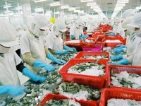 overcoming the yellow card shrimp exports to the eu still grow well