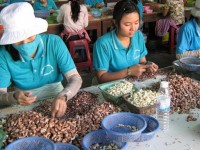 general department of vietnam customs handles obstacles of cashew companies