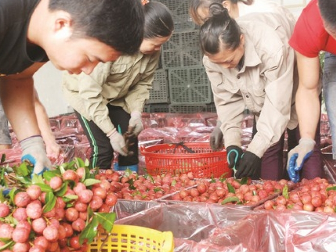 fruits and vegetables export is slowing down