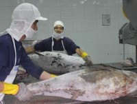 seafood exports up 15 in the first seven months
