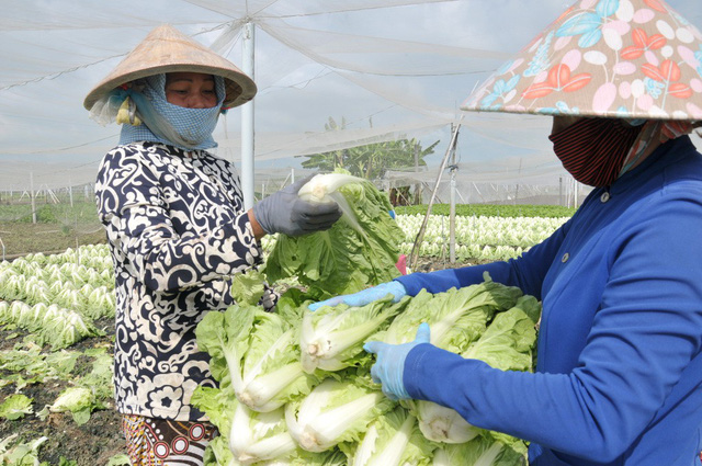 vietnamese retailers set bar higher than national standards to reduce dirty food tuoi tre news