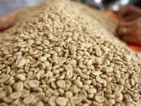 asia coffee vietnam trading slows indonesia muted
