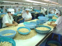 cashew sector gets modest profits in global value chain