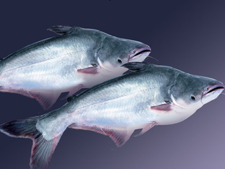 catfish exports to us decline