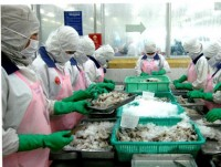 vietnam requests australia roll back ban on shrimp imports