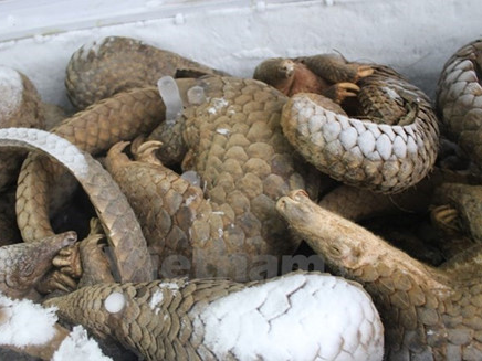 usaid supports vietnam to fight wildlife smuggling