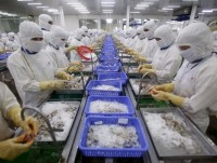 australian ban on vietnamese shrimp could drown exporters trade official