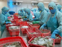 vietnam targets us 10 billion in shrimp exports by 2025