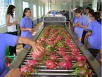 fruit vegetable exports continue growth trend in two months