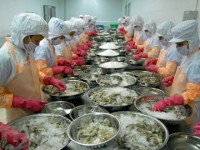 shrimp exports see bright prospect this year